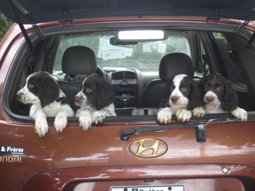 Chiots camion
